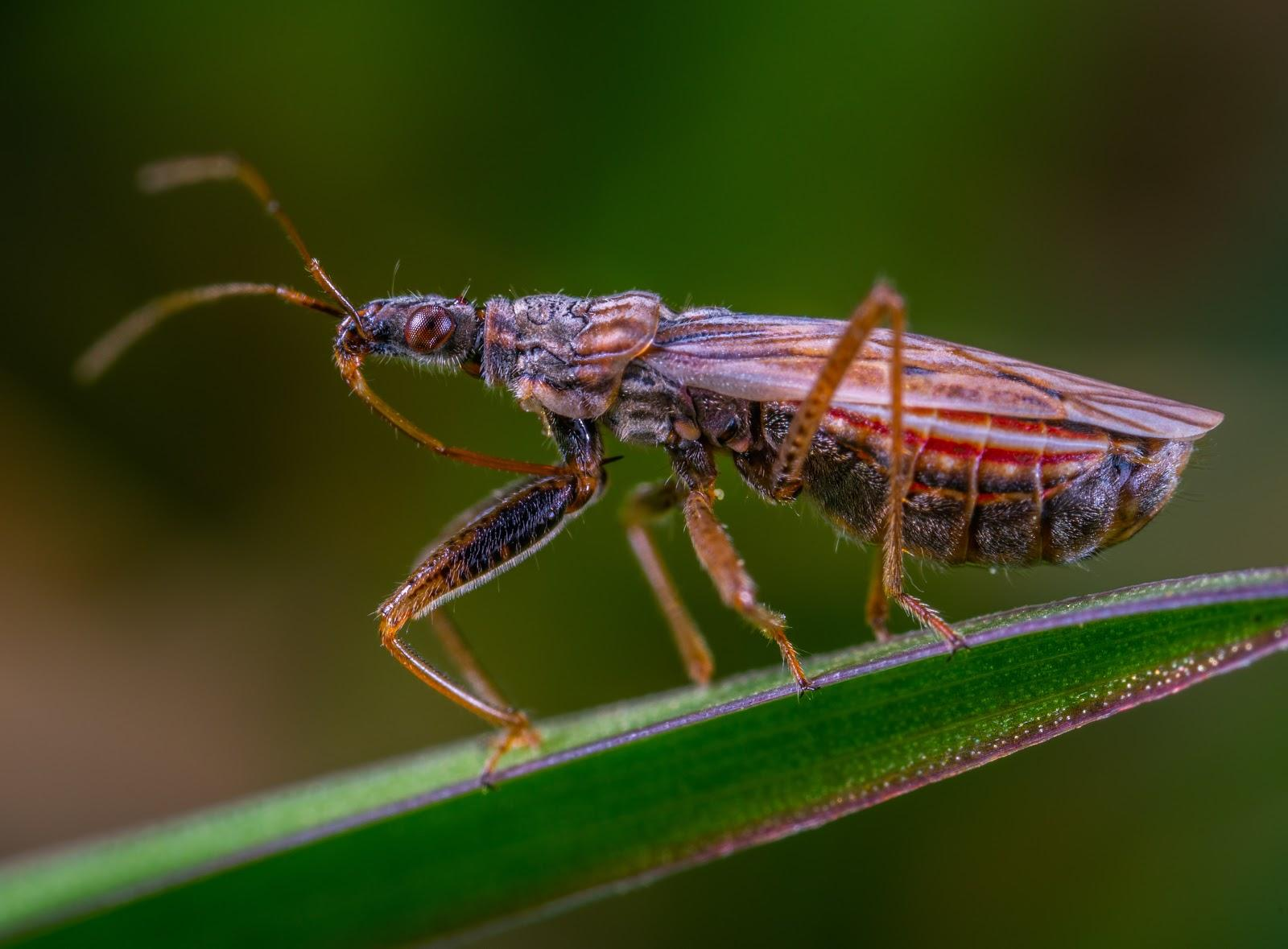 macro photography of an insect