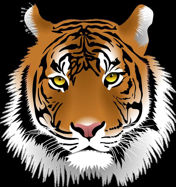 Tiger, Sumatran Tiger