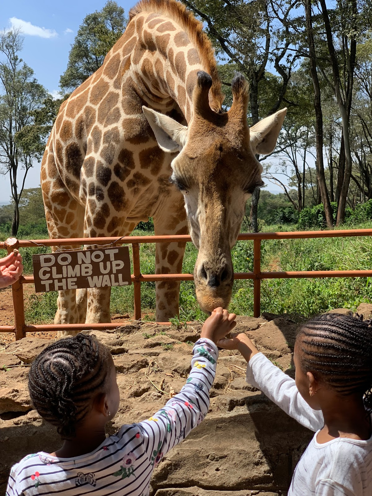 Langata Giraffe Centre. Ultimate Nairobi City Guide - Part 2 Photo by Young Lee @nakslee