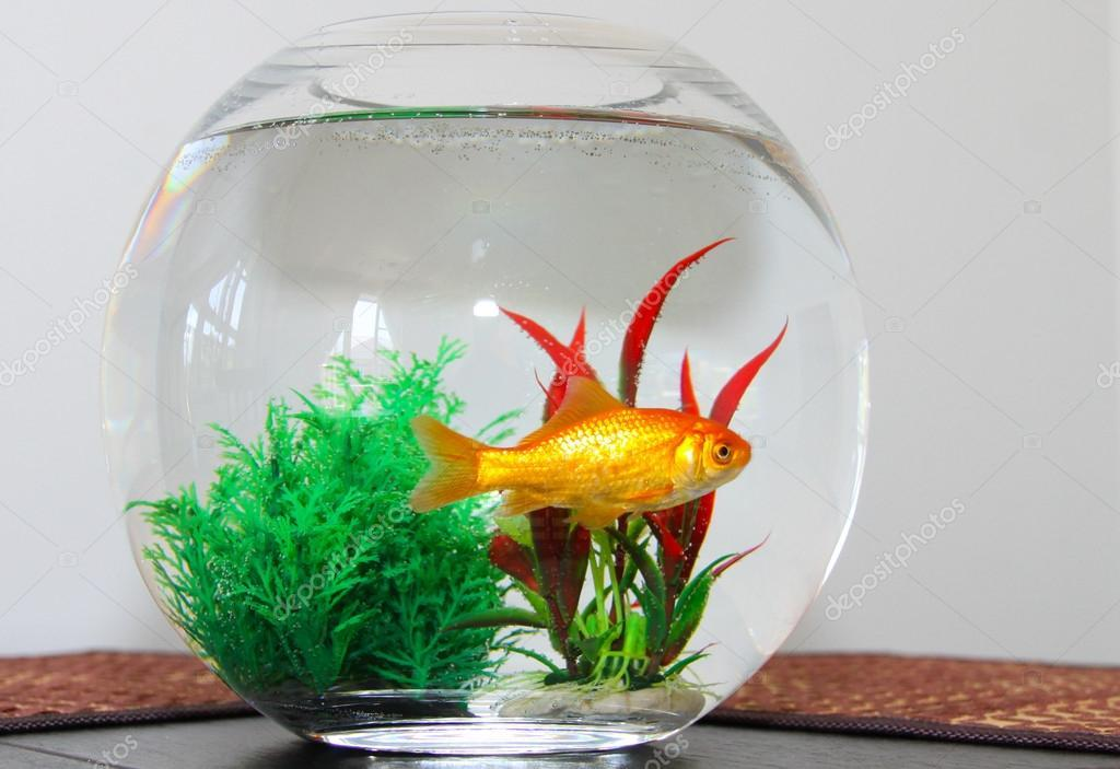 Goldfish ? Stock Photo, Image by © Ljudmilla #33630093