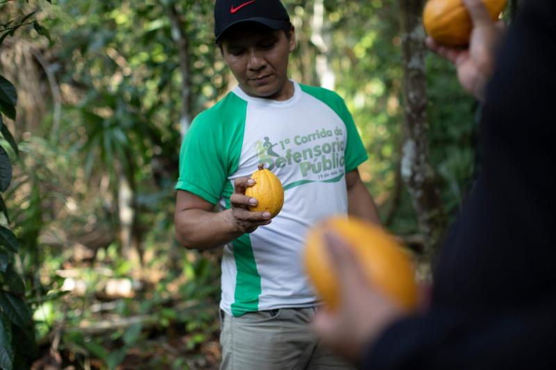 Эдмильсон Эстеван показывает спелый плод какао.
