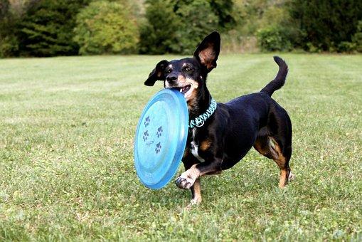 Perro jugando con freesbie en parque