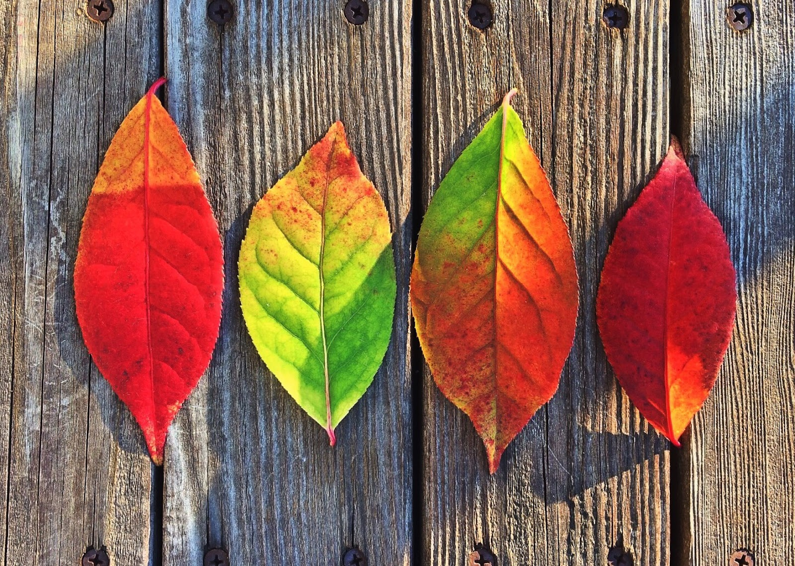 leaves-fall-colors-rainbow.jpg