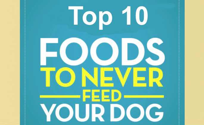 https://www.allaboutpetscare.co.in/2020/01/top-10-foods-to-never-feed-your-dog.html