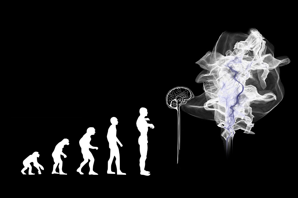 The evolutionary cycle with the brain and AI being the next step after humanity.