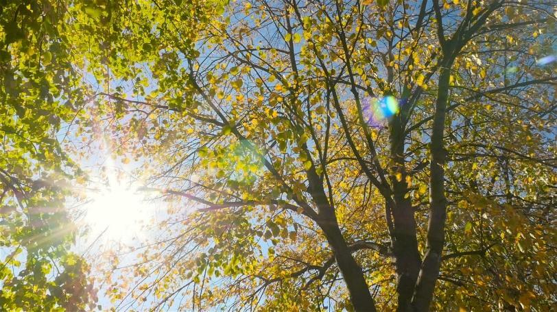 Sunlight Through The Leaves - Stock Video | Motion Array
