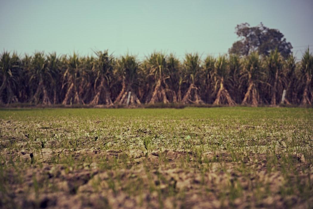 Há mais de 10 milhões de hectares de cana plantados no Brasil (Imagem: Ashwini Chaudhary/Unsplash)