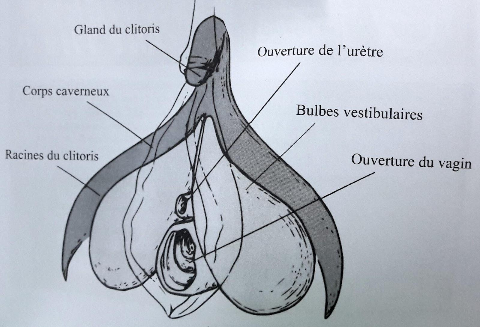 :L'OrigineDuMonde-Clitoris.jpg