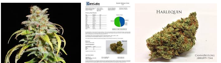 HARLEQUIN MARIJUANA STRAIN WITH CBD