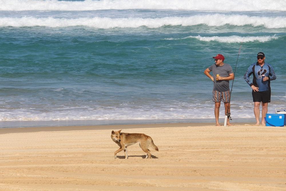 dog walking on beach