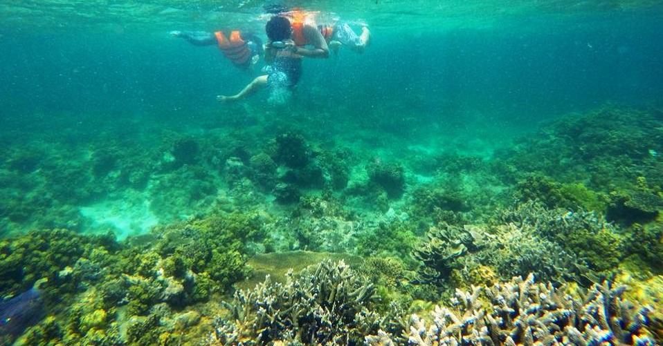 Lặn ngắm san hô cực gần bờ, chẳng mất công bơi xa