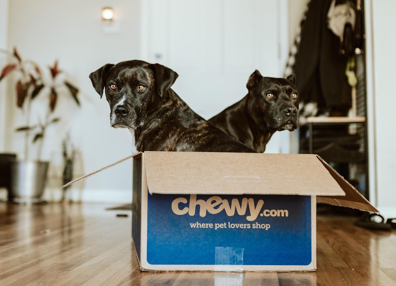 Two dogs in a shipping box