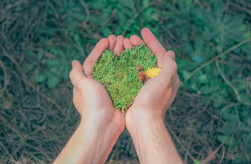 Person Holding Green Grains