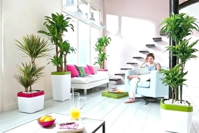 living-room-plant-ideas-indoor-plants-palms-types-modern-minimalist-ikea.jpg