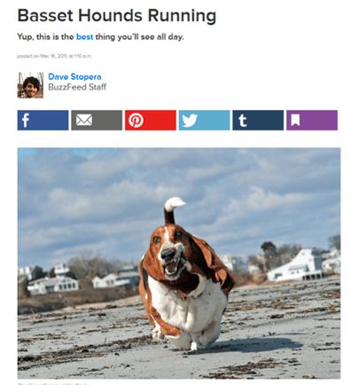 Basset hound running buzzfeed