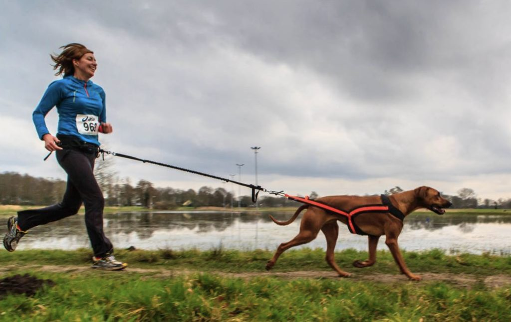 The Complete Guide To Canicross and How It Can Be a Great Sport For Your Dog