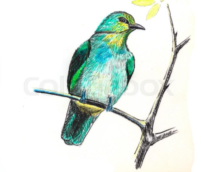 Image result for bulbul  illustration