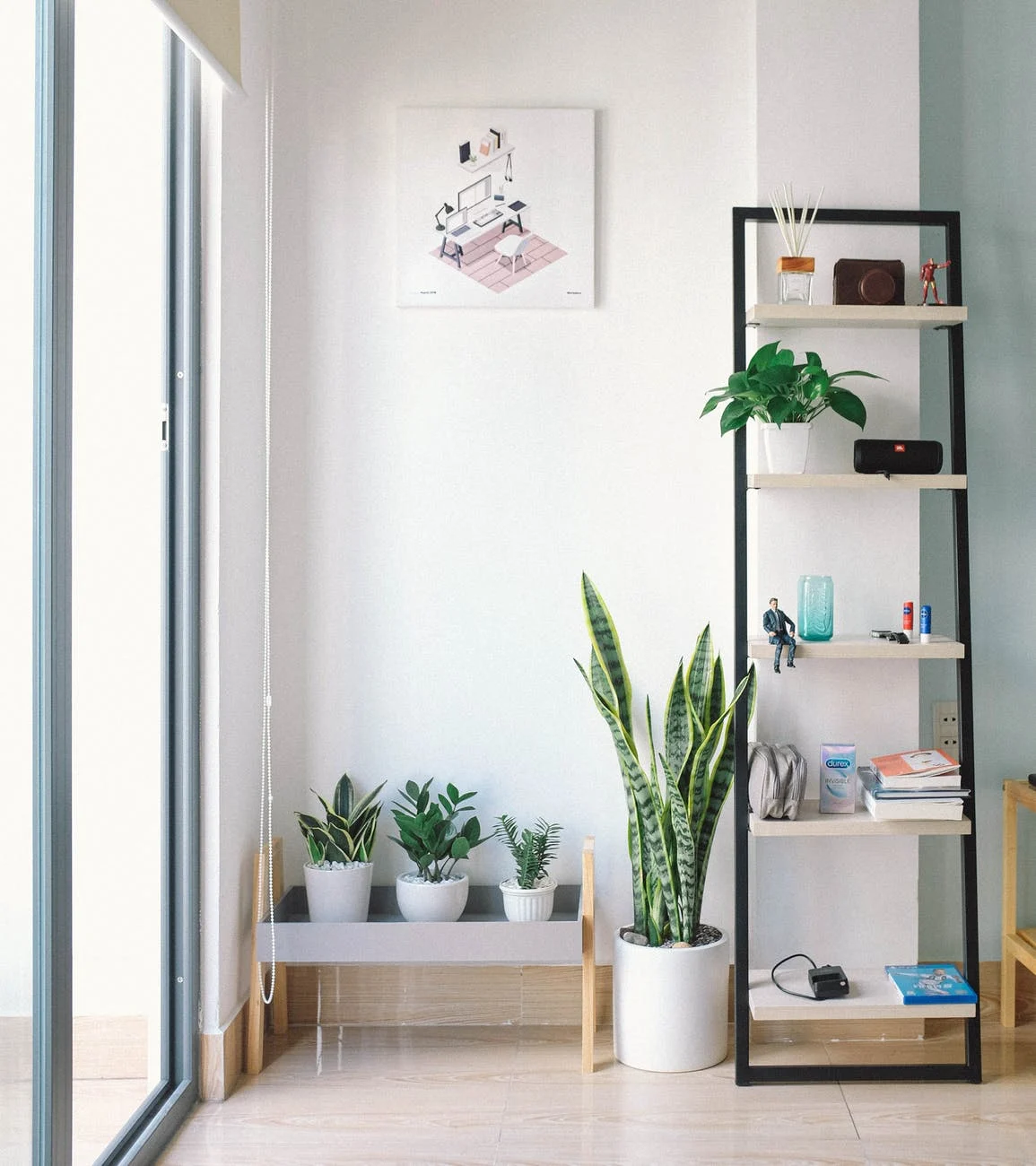 Plants on a wooden shelves