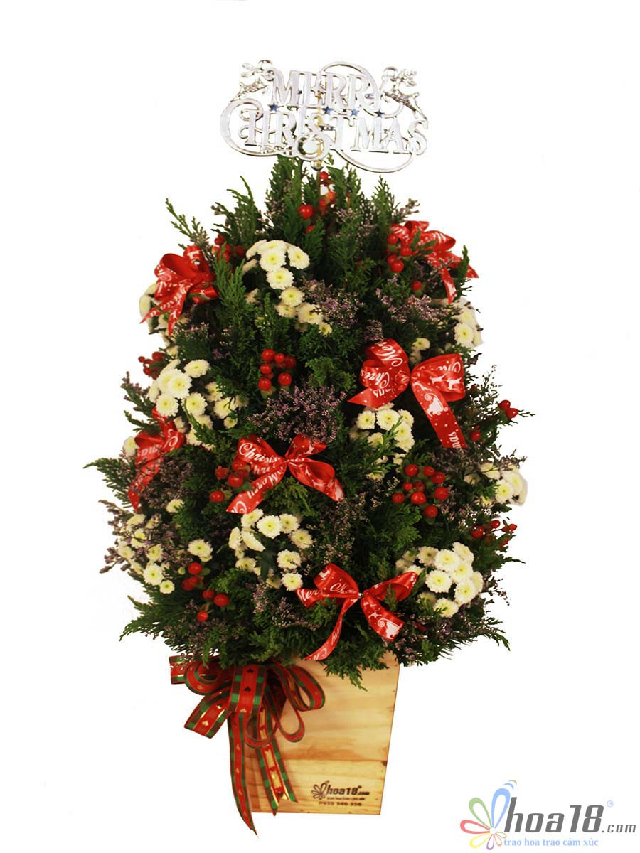 hộp hoa giáng sinh đẹp