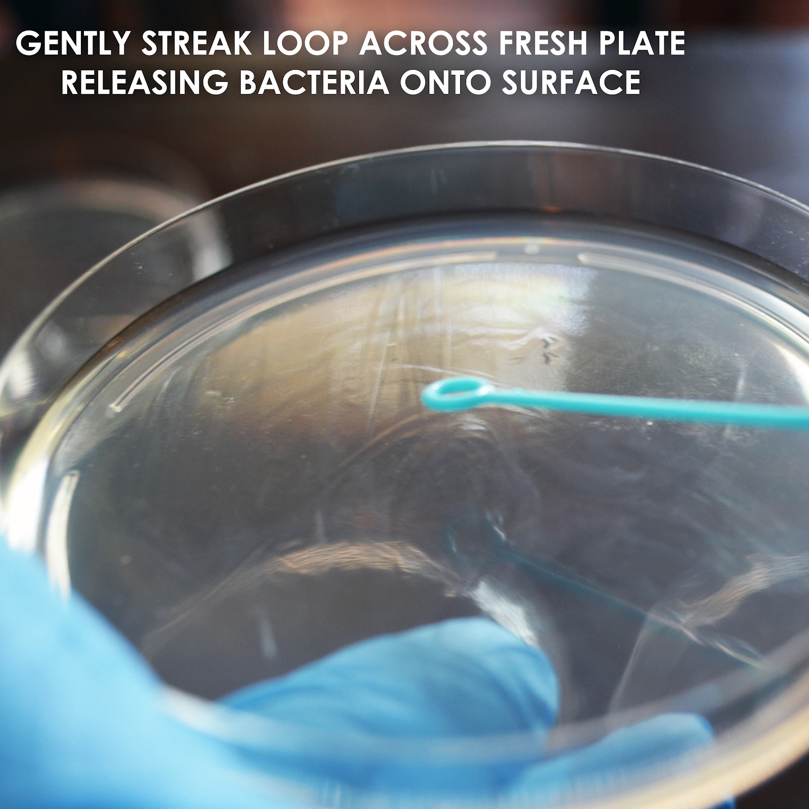 streakbacteria.jpg