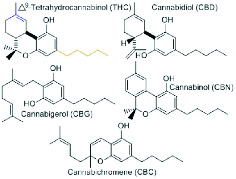 THC CBD CBN CBG CBC MOLECULES
