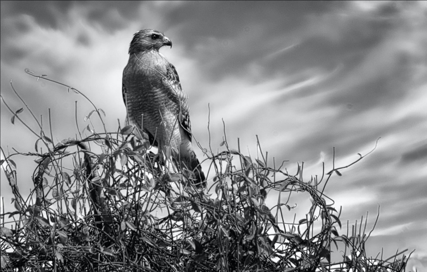 night vision scopes for bird watching.jpg
