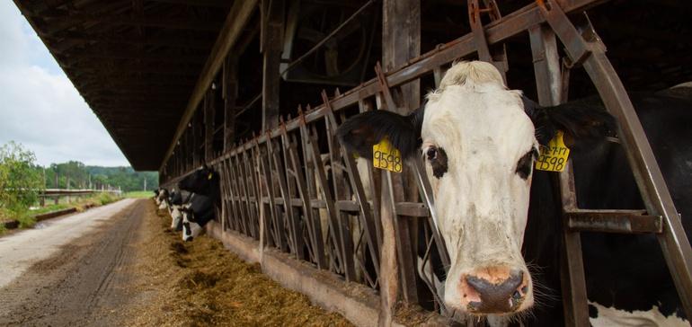 Hershey và Land O'Lakes hợp tác về tính bền vững cho chuỗi cung ứng sữa