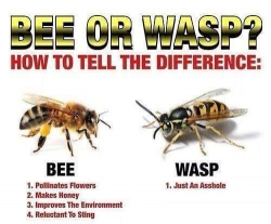 difference bees yellow jackets