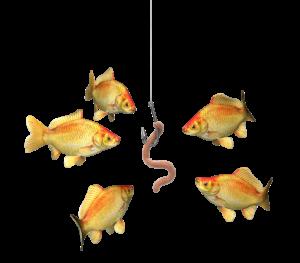 Neukunden Akquise Der Köder muss dem Fisch schmecken