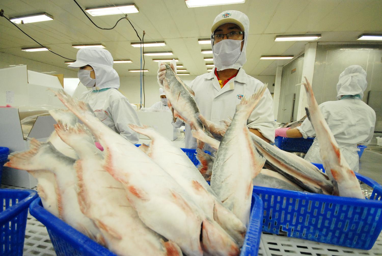 Ảnh - Chế biến XK cá tra tại Cty I.D.I - Ảnh - LÊ HOÀNG VŨ (13)