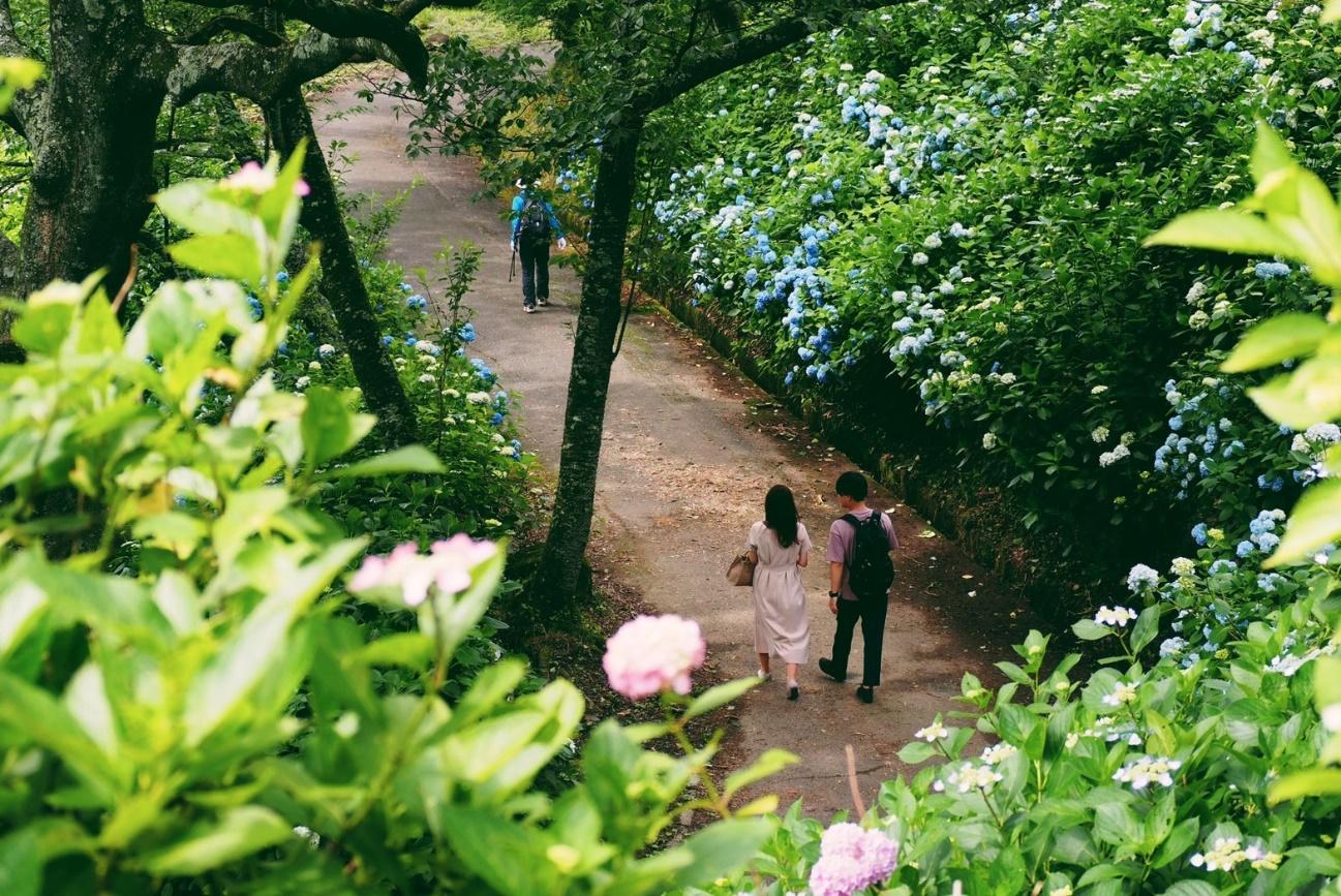 屋外, グリーン, ブロッコリー, ガーデン が含まれている画像  自動的に生成された説明