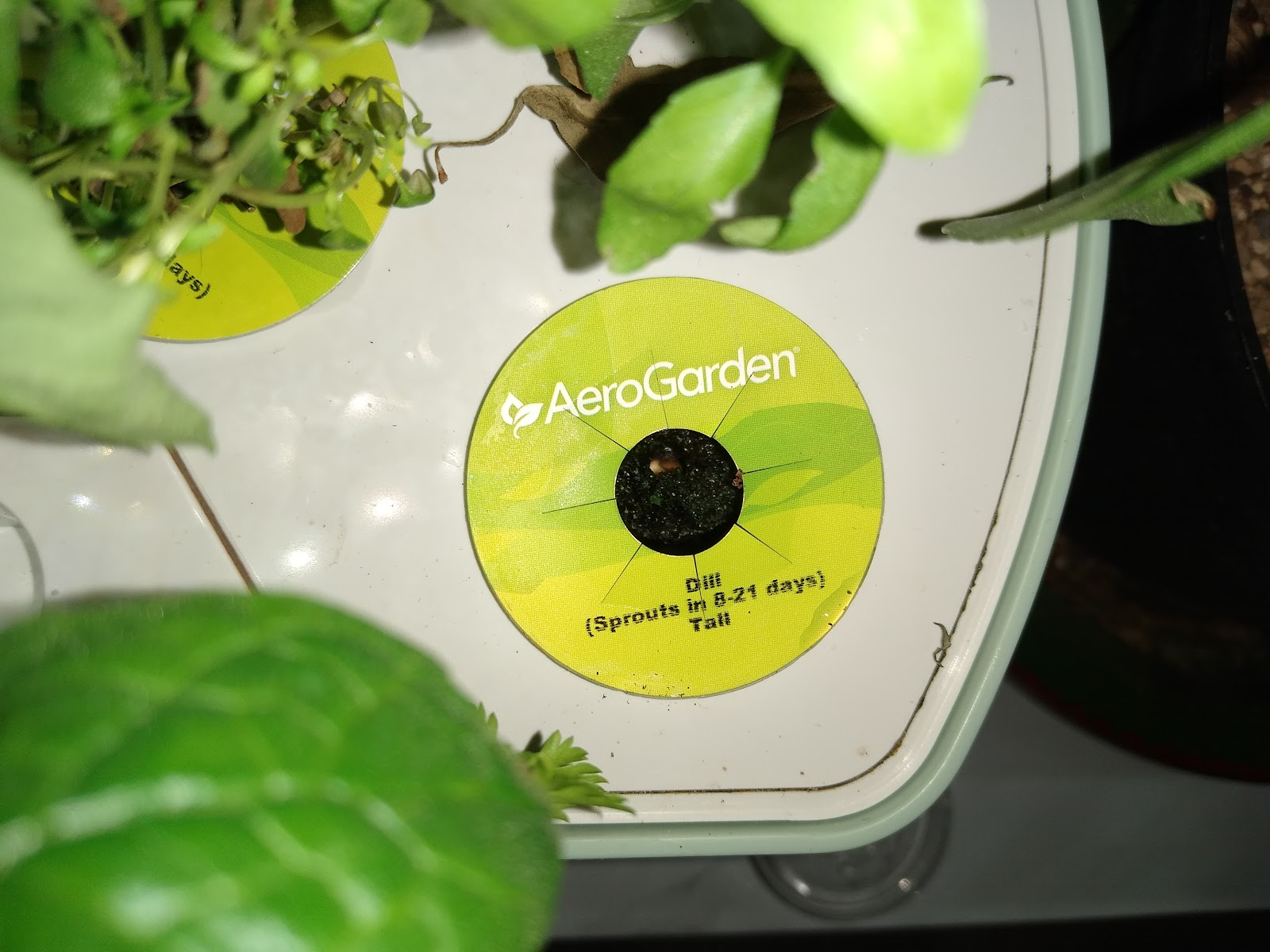 tomato seeds in an aerogarden picture