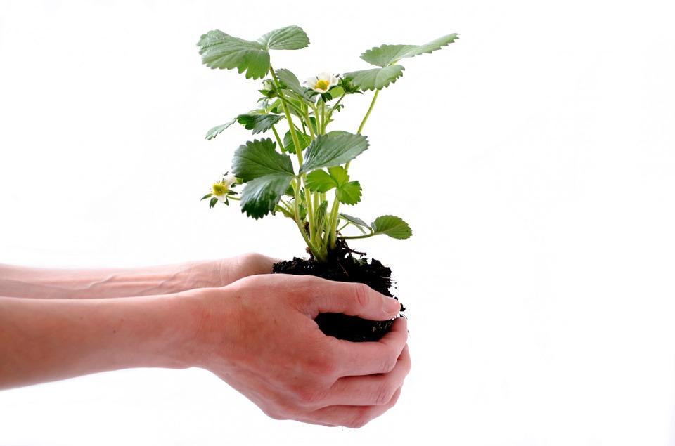 https://cdn.pixabay.com/photo/2013/07/18/15/06/plant-164500_960_720.jpg