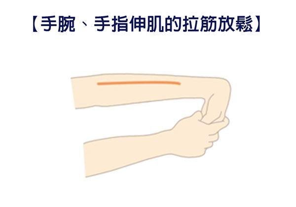 【手腕、手指伸肌的拉筋放鬆】動作時要感覺到前臂的外側(拇指側)有緊緊的感覺。