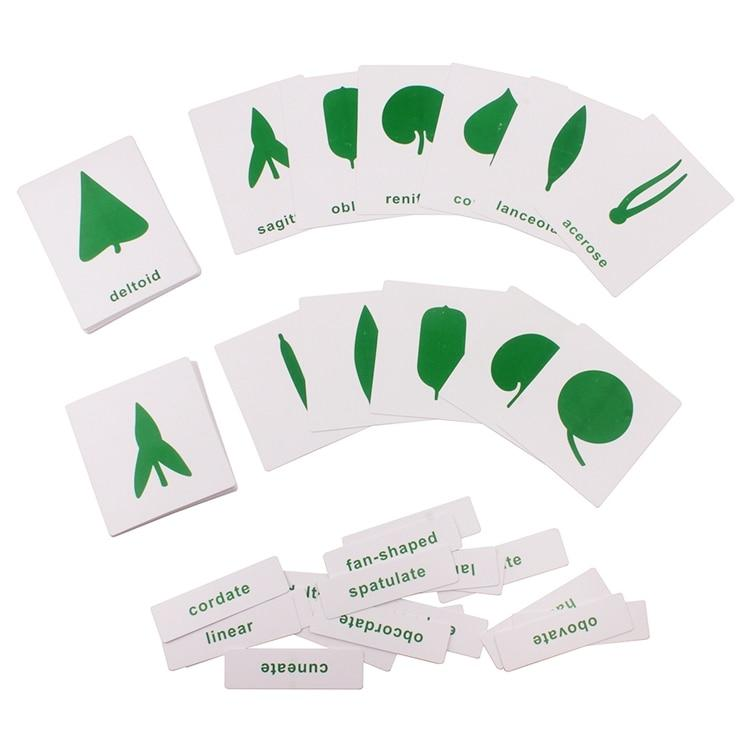 cartes botanique forme des feuilles activité bilingue