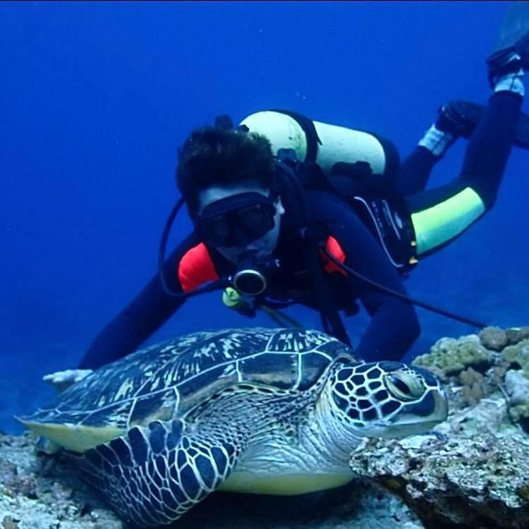 與海龜近距離接觸就來綠島潛水