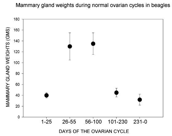 Вес парных молочных желез в зависимости от срока овариального цикла у нормально циклирующих небеременных сук гончих, не проявляющих признаков ложной беременности. По: Concannon, 1987 [9].