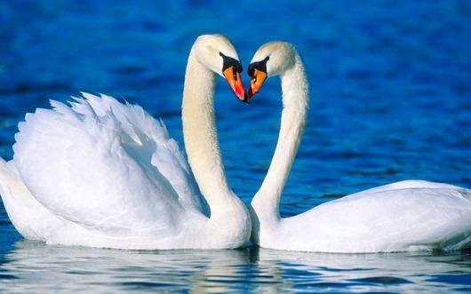 animal love 11