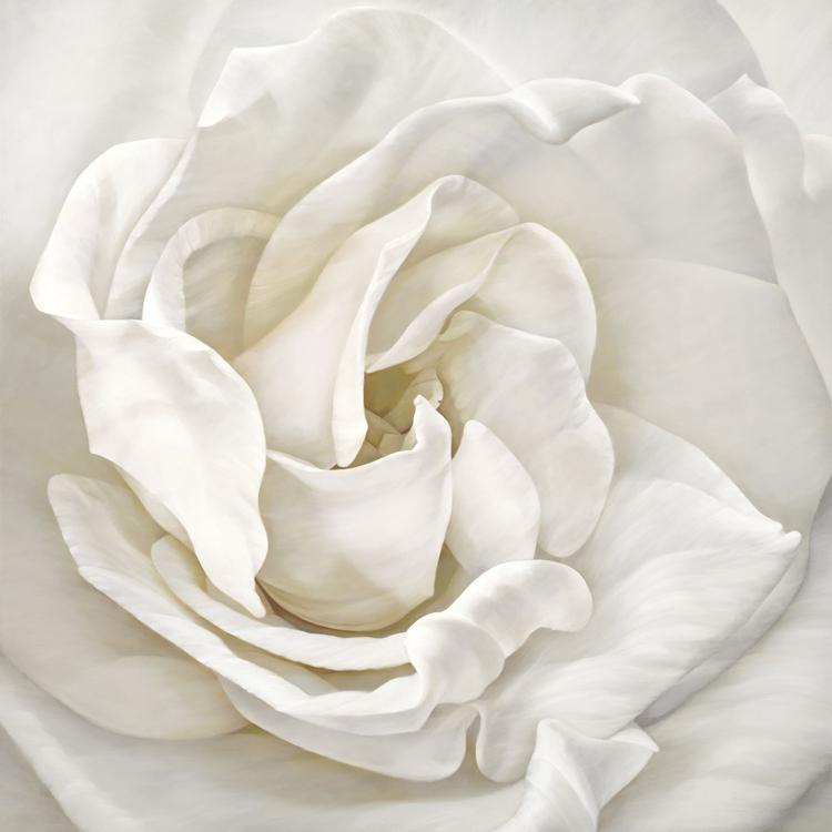 A picture containing plant, flower, cloth, rose  Description automatically generated