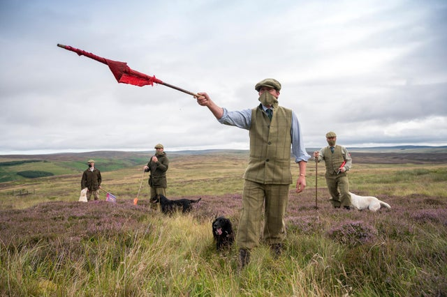 A Grouse Shoot in Scotland