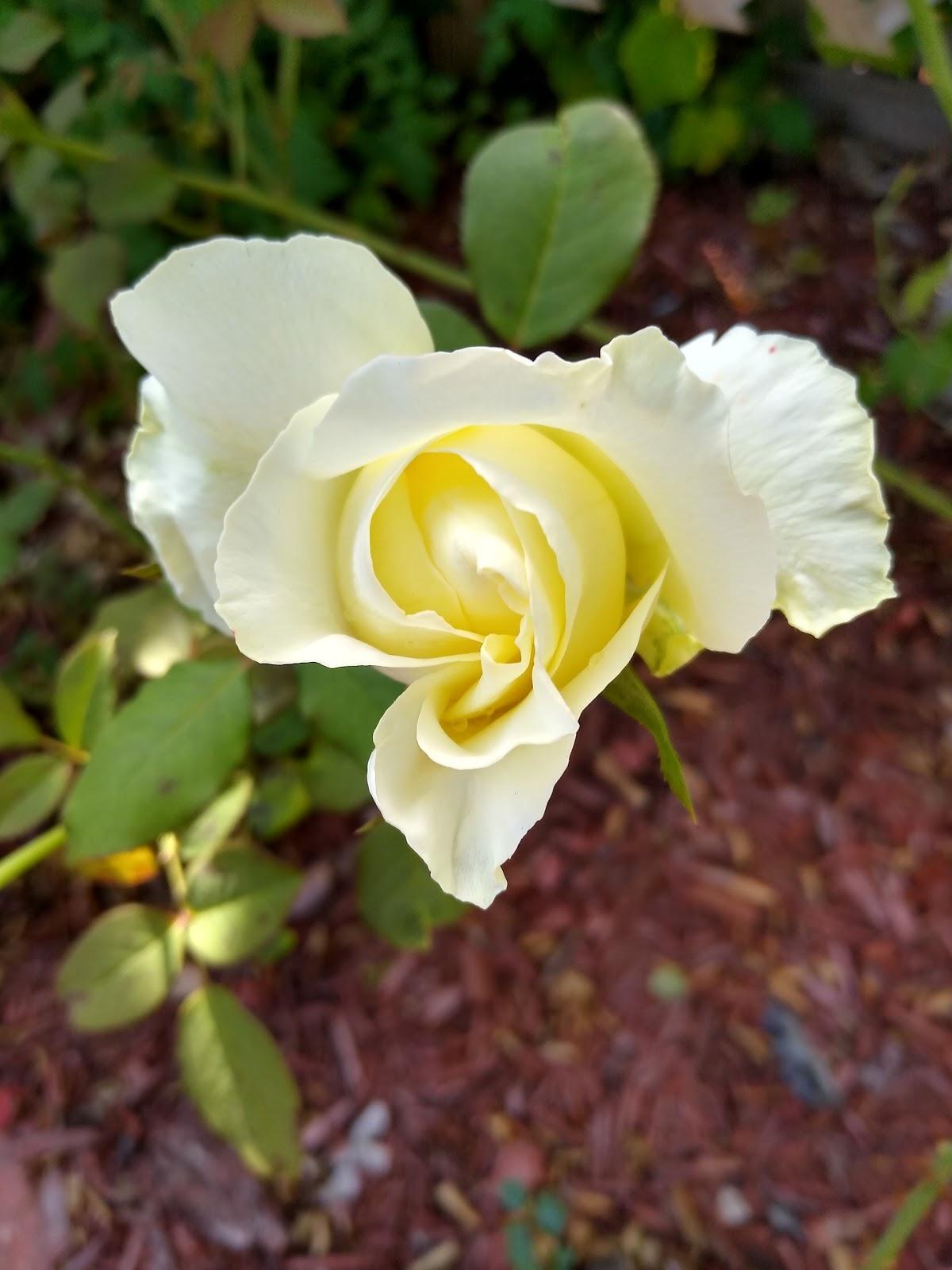 elina rose