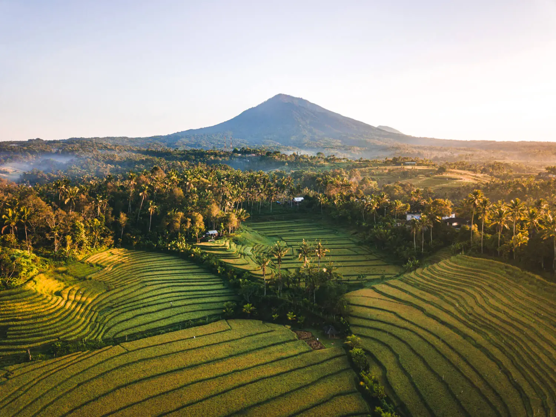 Belimbing sawah Bali