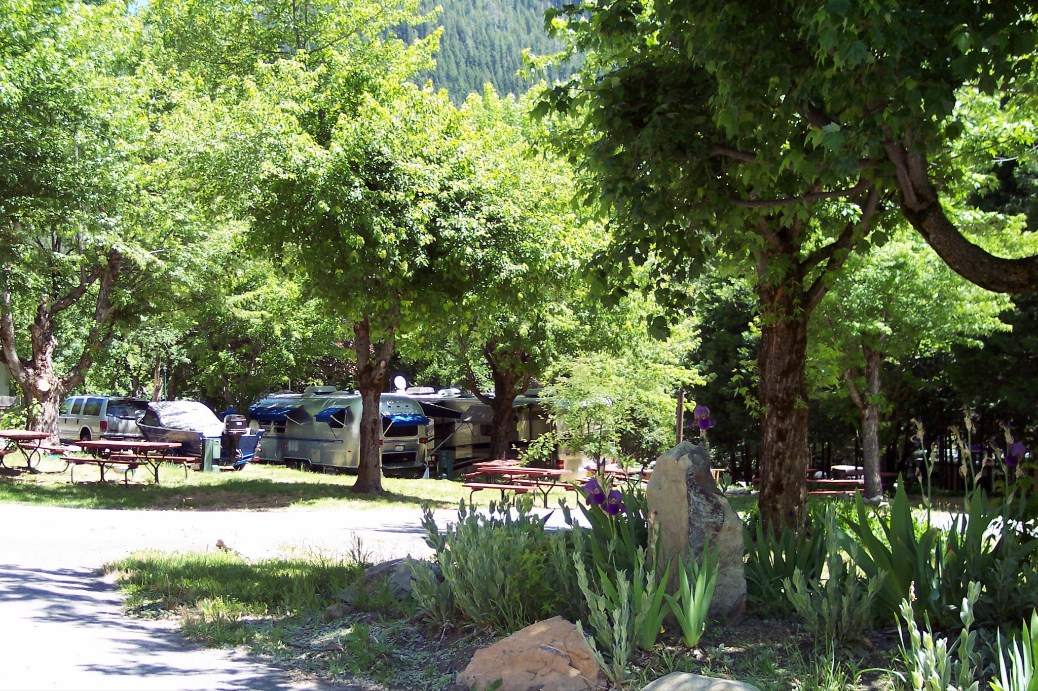 Green campground with flowers with an airstream tucked away in the woods.