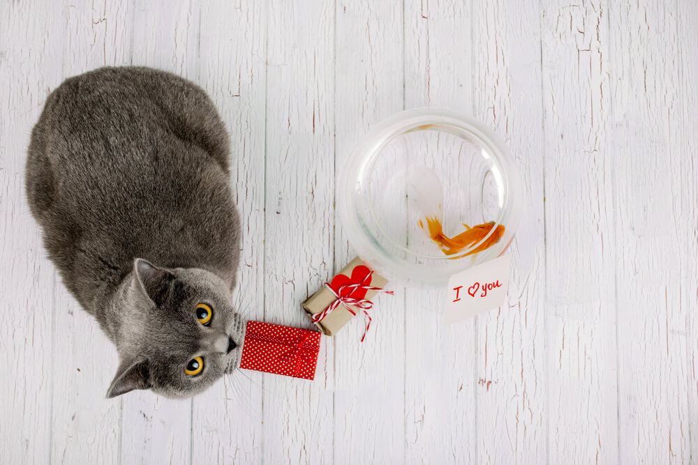 cat offering a goldfish and a love card as a gift