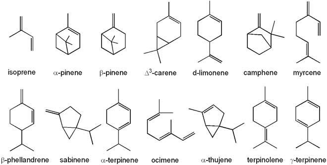 terpenes, small wonderful molecules from nature