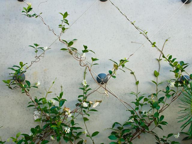 fachada-vegetal-cable-trenzado