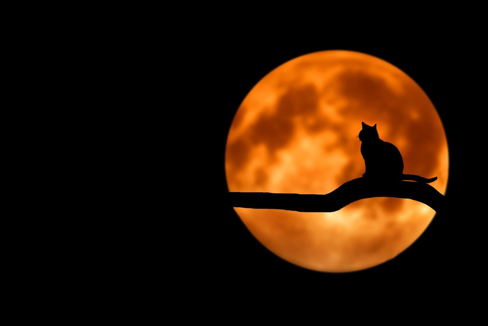 cat silhouette in front of the moon
