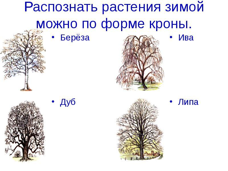 https://myslide.ru/documents_2/06984973e09a80769c1c9b2802efd389/img1.jpg