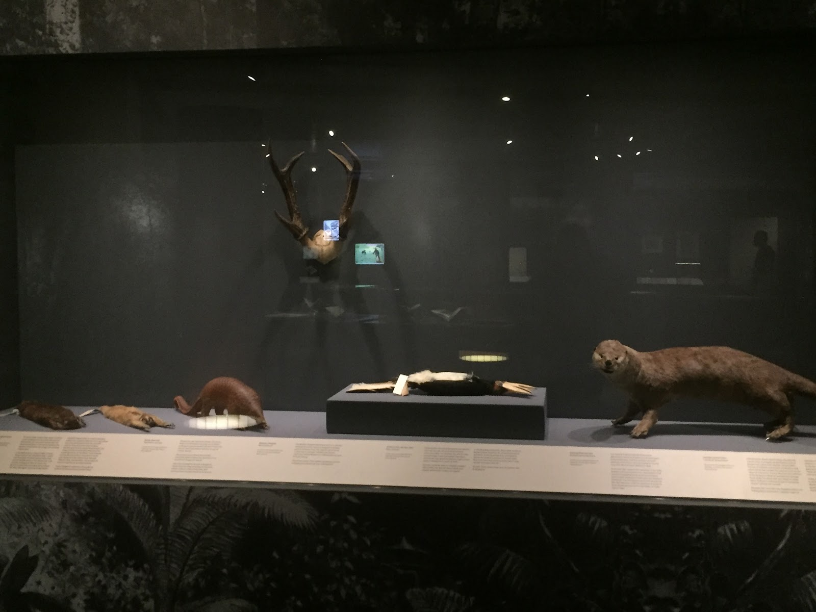 A collection of taxidermied animals
