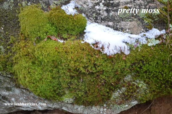 red river gorge moss